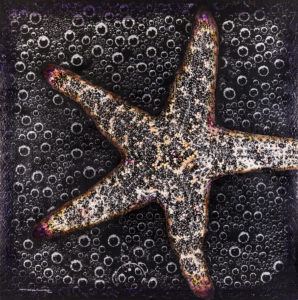 """Starfish Spectacular"" by David Humphries"