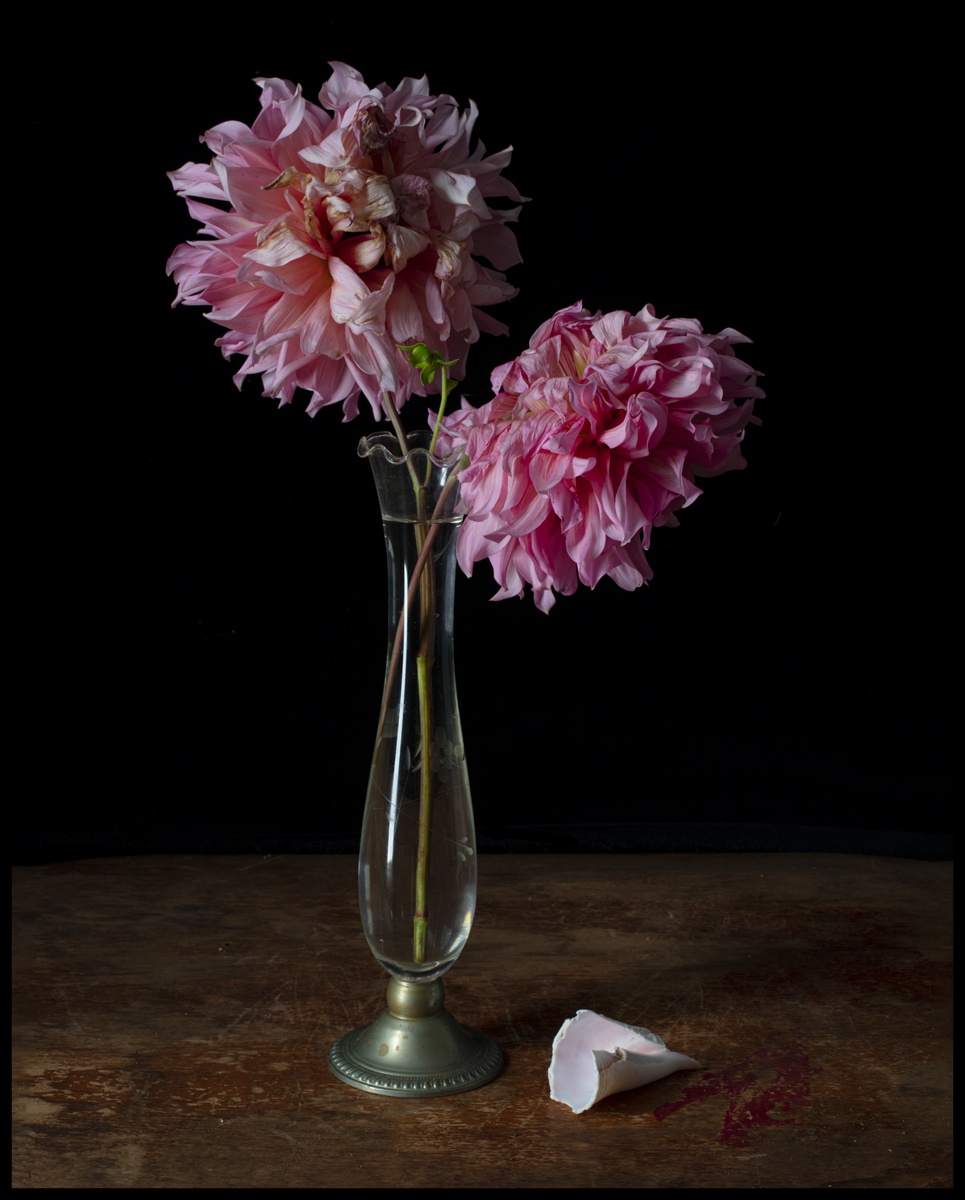 Pink Dahlias and Shell, 2019